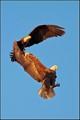 sunlit eagles