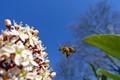 Incoming bee...