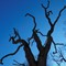 Tree against blue sky - new version