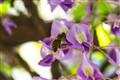 Bee_2013