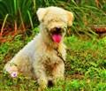 A Cute Doggie