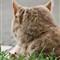 Cat & Mouse-1268