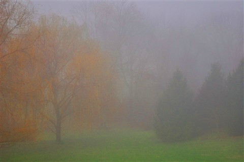 Early Morning Fall Fog