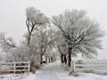 Winter Driveway