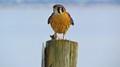 2013-01-21 GSL Wetlands 166