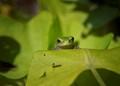 Green frog in garden
