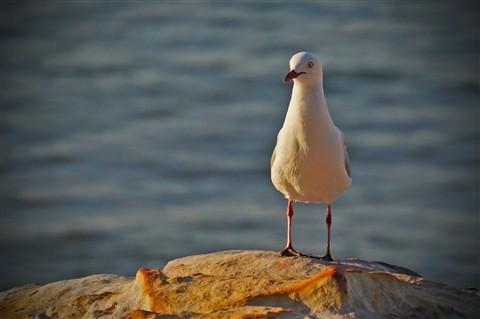 seagull_edit