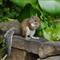 Pana G3 squirrel_20110916_063