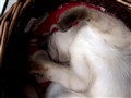 cat in a deep sleep