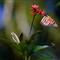 Butterfly upload