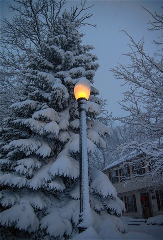 Snow covered spruce tree in the light, Dec 2012