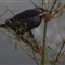 Crow: sx50: dark images