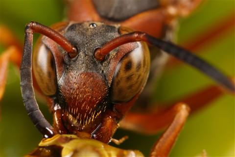 Wasp NG