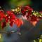Leaves-1060088