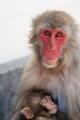 jwd_Nursing Monkey