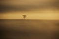 Lone tree in the mist 2