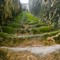 Moss covered stairway in Essaouira Morocco-4663