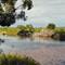 Herons on a Riverbank
