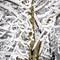 Nature Mimics Pollock: OLYMPUS DIGITAL CAMERA