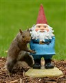 Squirrel's New Friend