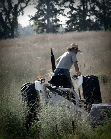 Hay Cutting