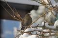 female approaching bird feeder