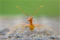 Hallo Ant ...