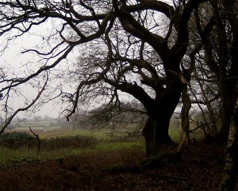 Wiggonholt Oak (47490946)