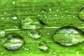 Wet Mornin'
