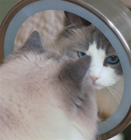 mirror leyla-2