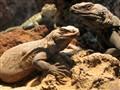 Lizards R Us