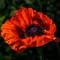 Blomster-01841-Edit