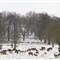 2013 snow WPO 005