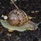 Syemore the Garden Snail