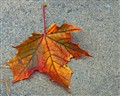 Retired Leaf