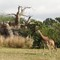 14 Safari crop