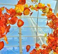 Chihuly poppies