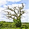 Pixel_Bender_Tree-