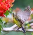 Another Hummingbird?