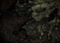 rust_leaf