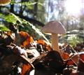 SOOC Mushroom