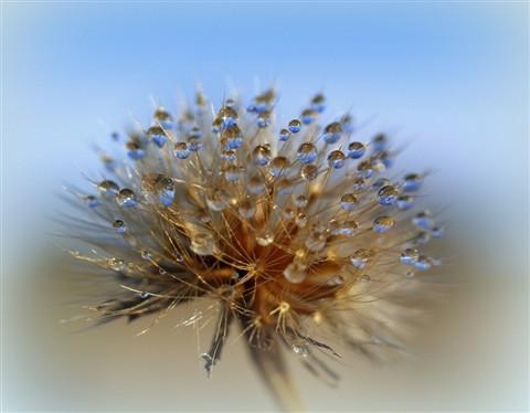 sky dew 1-20121029-1000