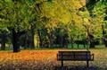 Bench in Folkparken, Norrköping