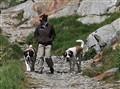 San Bernardo dogs