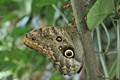 Butterfly on a stalk
