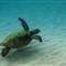 Turtle (1) book