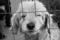 Dog through the fence