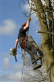 Tidying the Ash