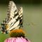07 butterflies-32-Edit