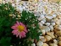 garden pebbles...